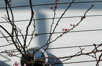 WPC Außendiele mit Frühlingsdeko