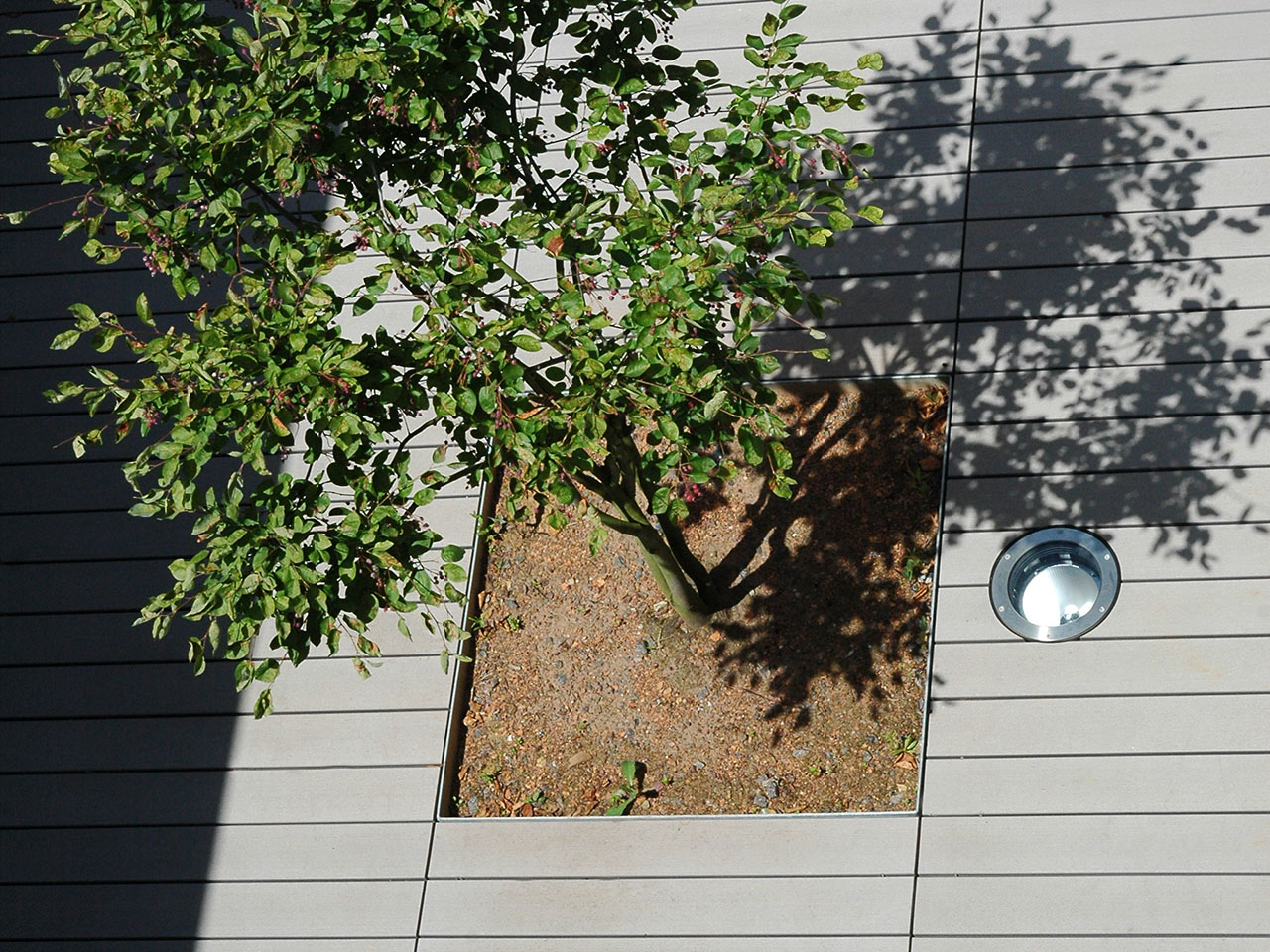 Terrasse mit WPC Terrassendielen und integrierter Bepflanzung mit Baum von oben