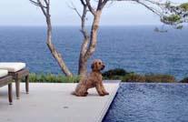 Terrasse mit mydeck wpc dielen als poolumrandung und kleinem Hund der darauf sitzt