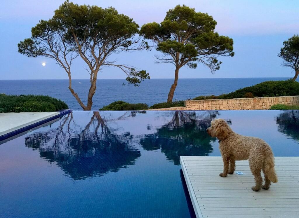 Hund schaut von Poolumrandung aufs Meer
